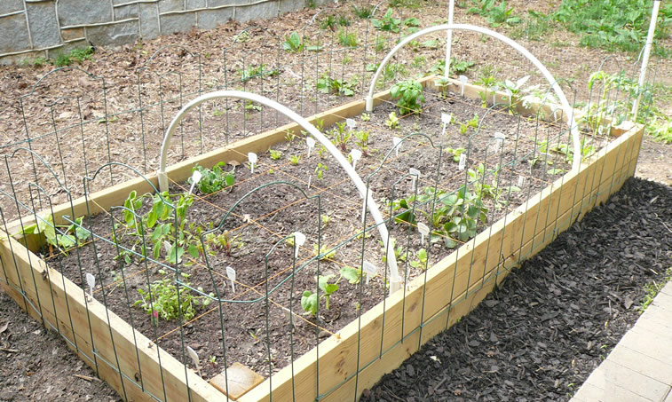 The Fence Is Fixed On The Short Wooden Panels To Protect The Plants, And A